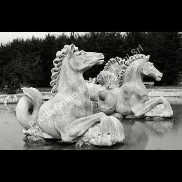 007 Sea Horse